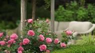 Růžovo-modro-bíle kvetoucí a neuvěřitelně voňavá zahrada pro inspiraci